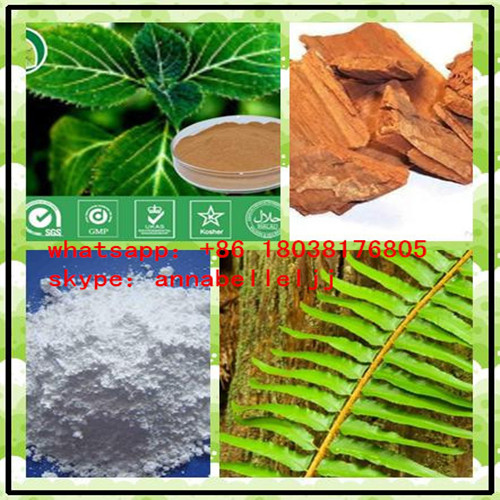 Natural extract  Powders Yohimbine HCI  for Male Enhancement  CAS 65-19-0